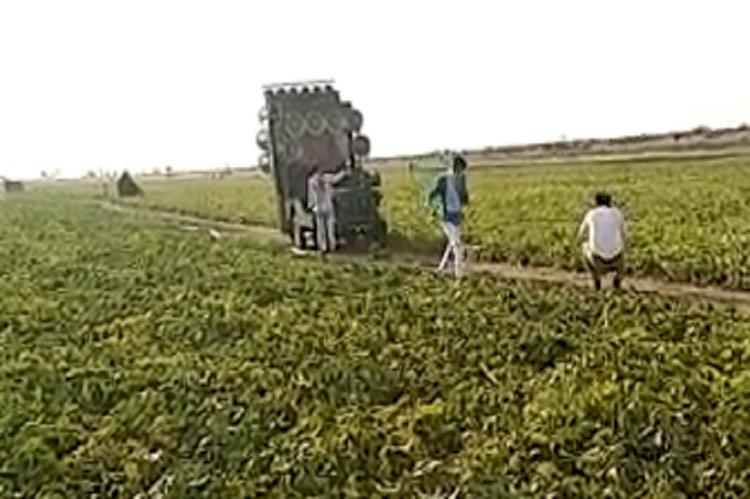 पाकिस्तानी टिड्डियों को भगाने का अनोखा अंदाज