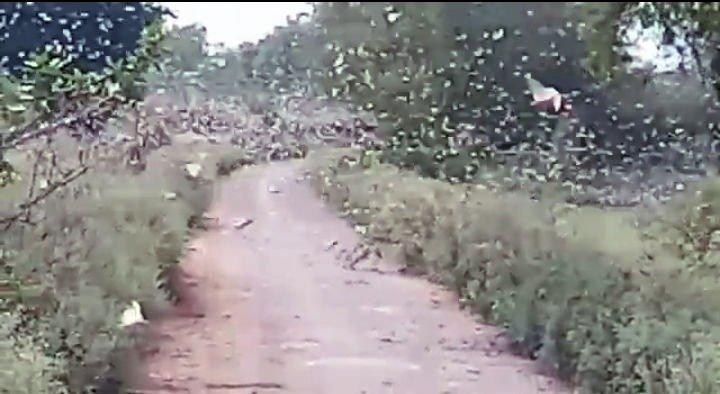 चित्रकूट के आधा दर्जन गांवों में हमला कर डभौरा की तरफ पहुंचा टिड्डी दल
