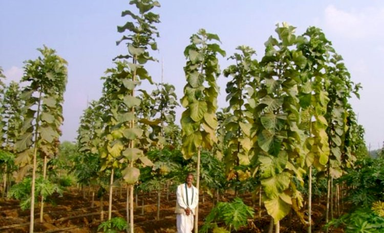 बुन्देलखण्ड के किसानों को खुशहाल बनायेगा सागौन