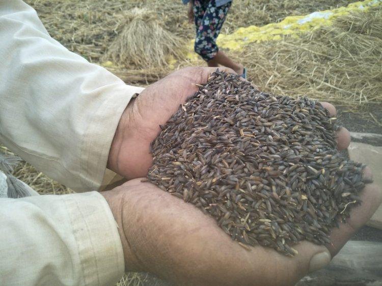 काला नमक के जरिए कृषि बिलों के विरोधियों को किसान जाहिद ने दिखाया आईना
