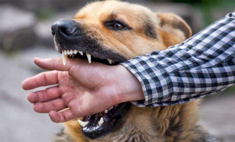 बाँदा : कुत्ते के काटने का मामला हाईकोर्ट पहुंचा कोर्ट ने दिया स्थगनादेश