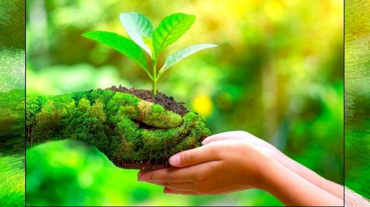 वसंत चाहिए तो प्रकृति को बचाइए