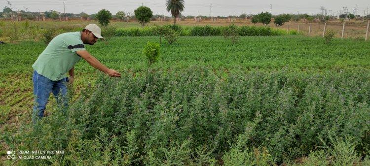 बुन्देलखण्ड में अन्ना प्रथा से निजात दिला सकती है चारे की फसल लुसर्न