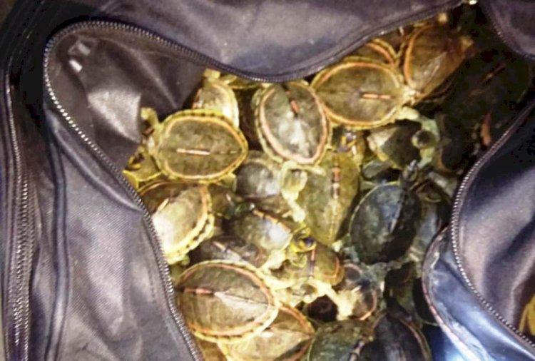चित्रकूट में ट्रेन की तलाशी के दौरान लावारिश बैग से 140 कछुआ मिले