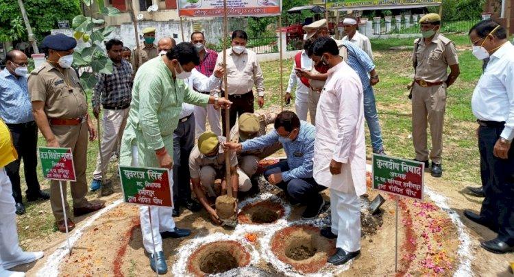 हमीरपुर में महज 12 घंटे में रोपित हो गए ऑक्सीजन देने वाले 45.53 लाख पौधे