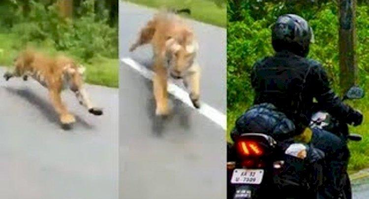 बाघ ने बाइक सवारों पर हमला किया, दो की मौत, तीसरे ने पेड़ पर चढ़कर बचाई जान