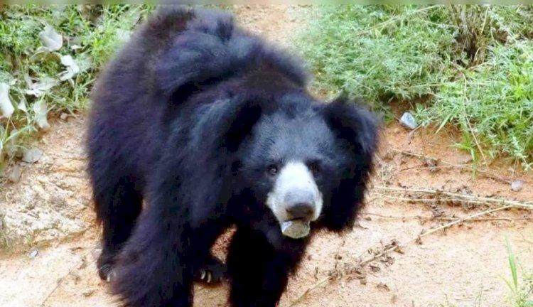 चरवाहे के ऊपर हमला कर उसकी जान लेने वाले भालू की संदिग्ध मौत