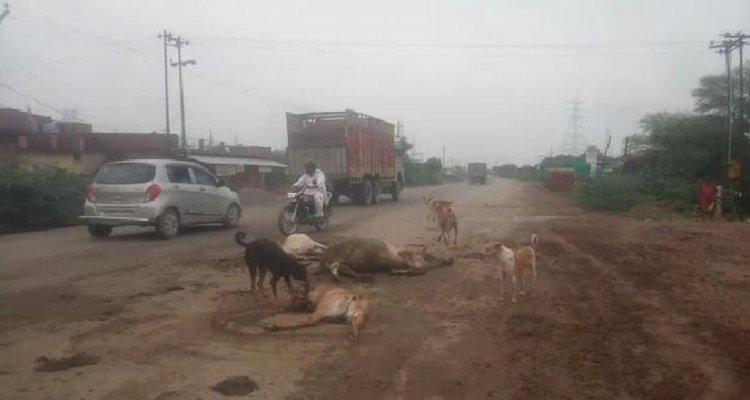 तेज रफ्तार ट्रक ने गोवंश को मारी टक्कर दो की मौत, एक घायल
