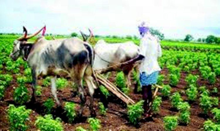 बुंदेलखंड को जैविक कृषि क्षेत्र घोषित..